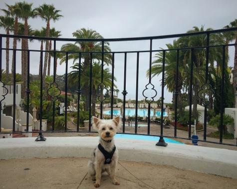 Santa Barbara Dog