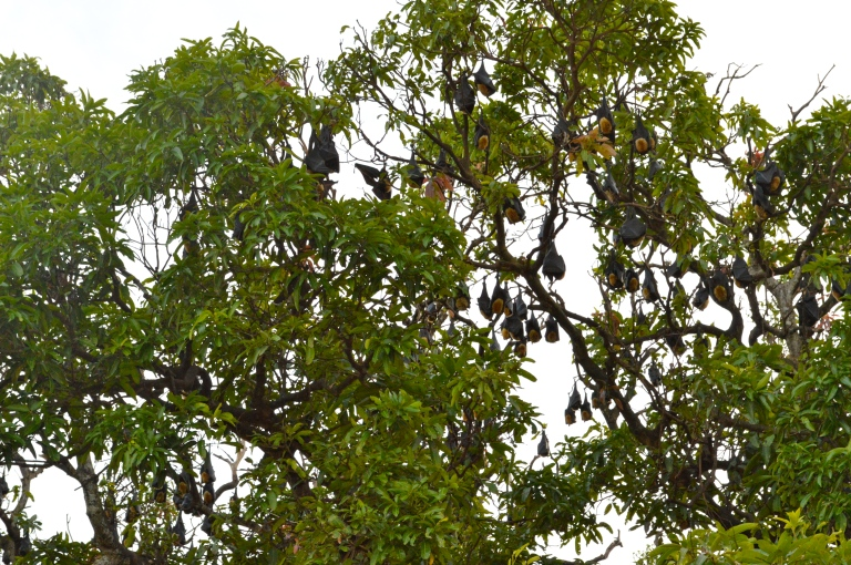 BATS!!! Real Life Bats...EVERYWHERE! Very noisey little guys with furry heads.