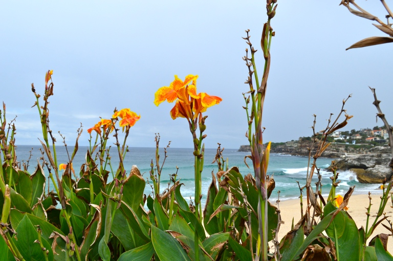 Beachside Flowers along our hike.