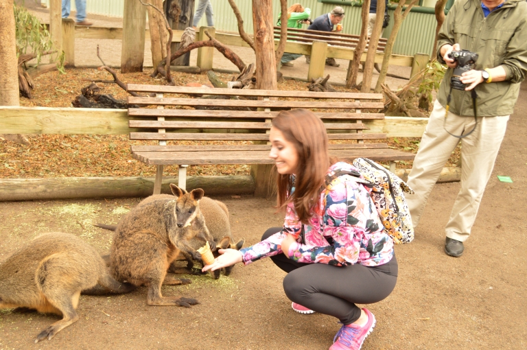 These little wallabies eat hay from ice cream cones. They hold them in between their little hands, and it is sooooo cute.