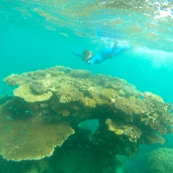 Great Barrier Reef, Cairns, Australia