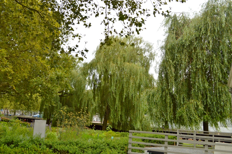 I absolutely fell in love with the willow  trees! Until this point, I had only read about them.