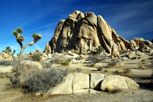 JOSHUA TREE NATIONAL PARK, Photo Provided by: http://www.chayacitra.com/
