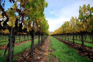 NAPA VALLEY, Photo Provided by: National Geographic